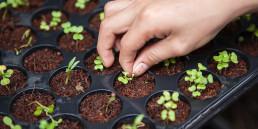 Sustentabilidade ponta a ponta: entenda como as empresas podem atingir patamares de sustentabilidade por toda a sua cadeia produtiva